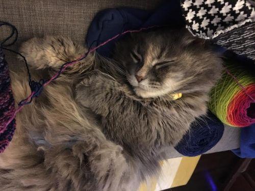 smooshy yarn